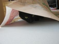 Helpful kitten