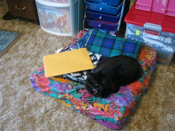 Spot likes to nap on my floor cushion ... and fabric and paper and counter tops, basically she'll sleep anywhere.