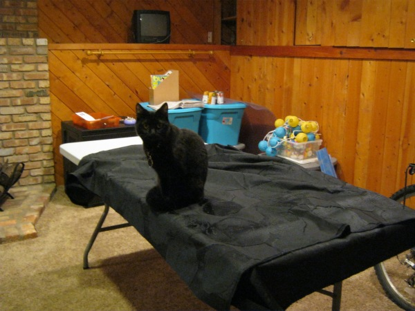 Spot helping me lay out the fabric...