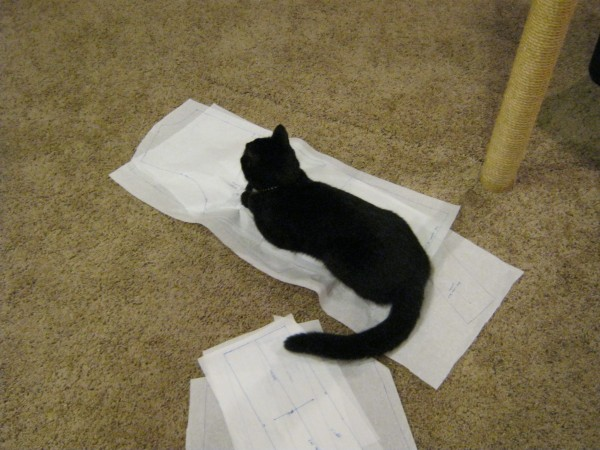 Spot helping me trace the pattern...